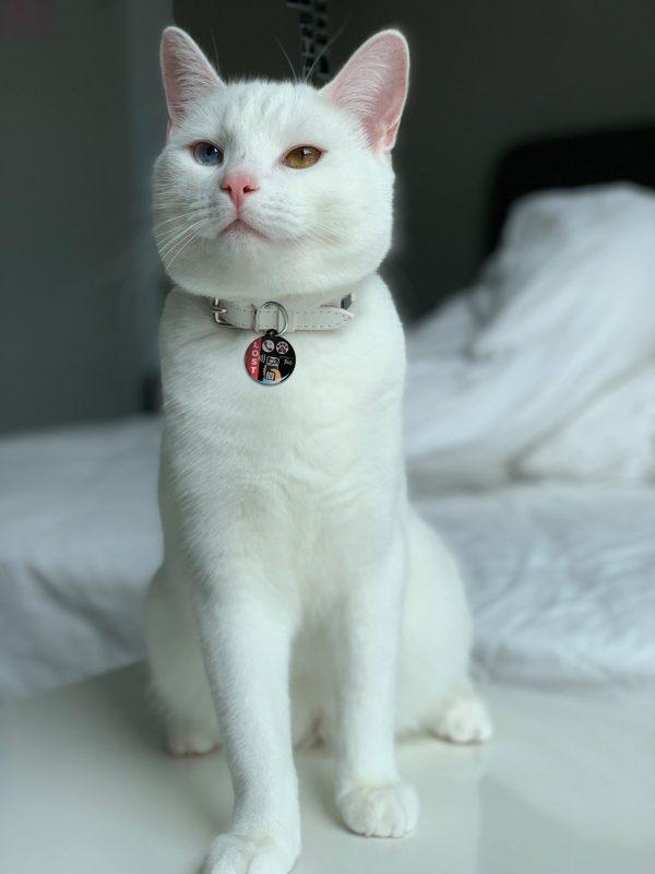 Emerid Pets Gato 1